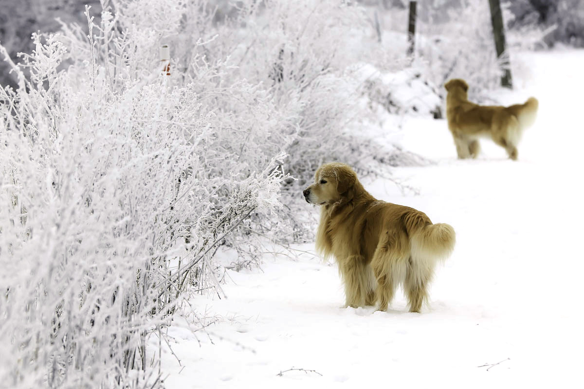 IMAGE: http://www.bwhip.com/galleries/BlogPhotos/snowdogs1215/9F2A1141.jpg