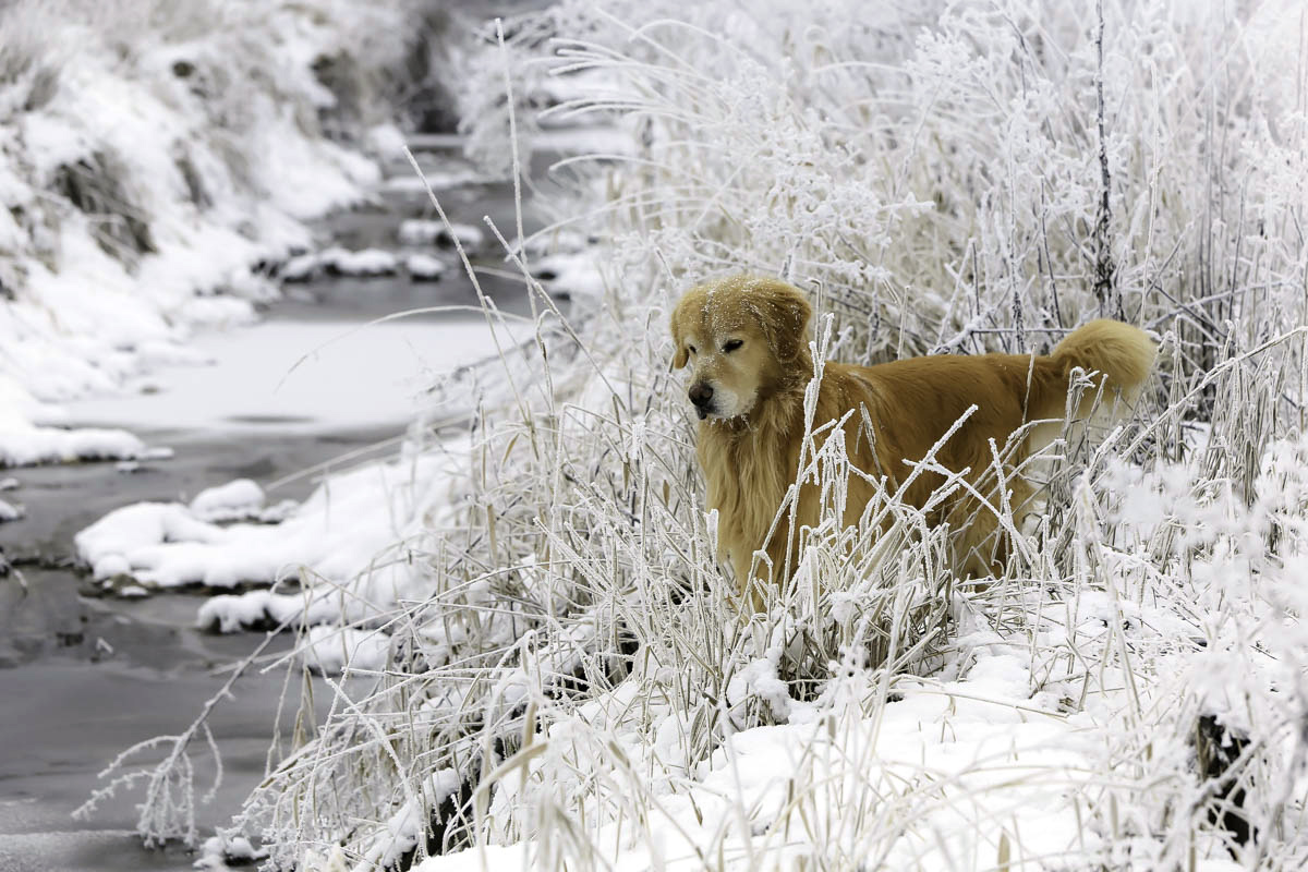 IMAGE: http://www.bwhip.com/galleries/BlogPhotos/snowdogs1215/9F2A1143.jpg
