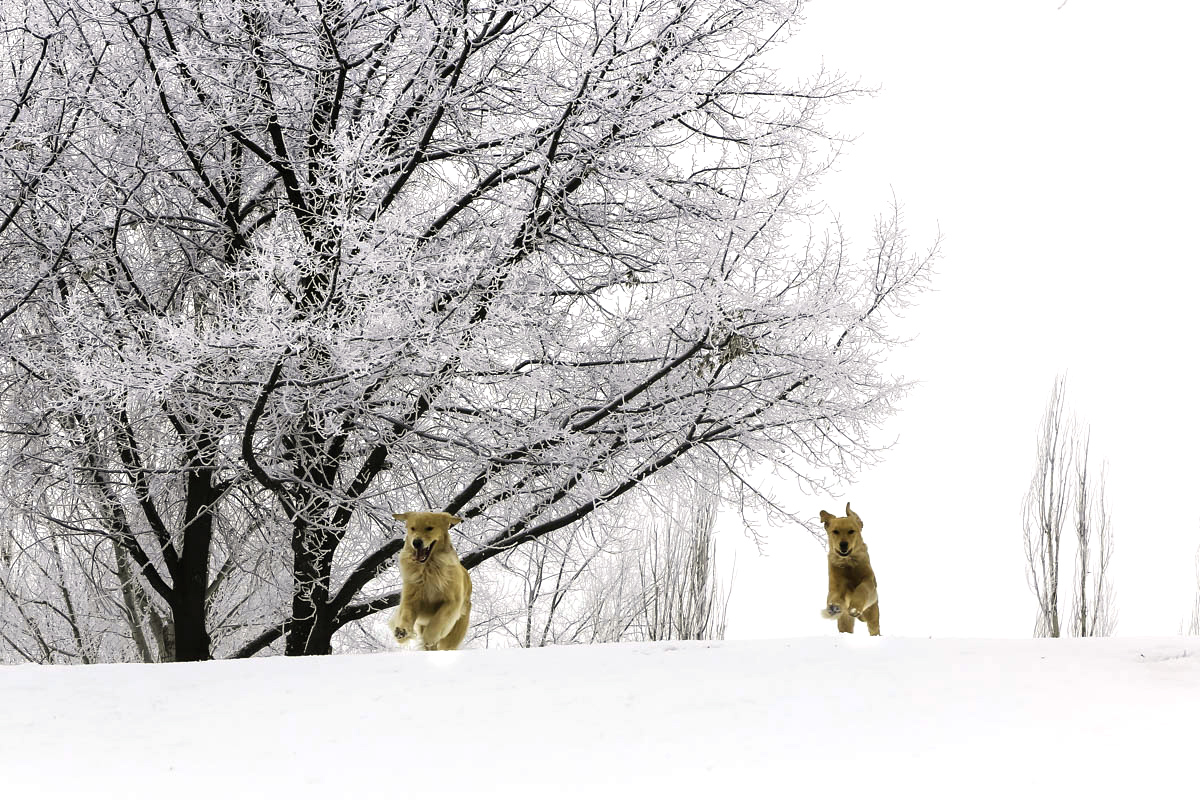 IMAGE: http://www.bwhip.com/galleries/BlogPhotos/snowdogs1215/9F2A1199.jpg