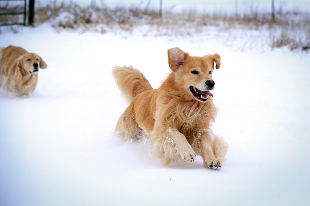IMAGE: http://www.bwhip.com/galleries/BlogPhotos/snowdogs_1114/3653.jpg